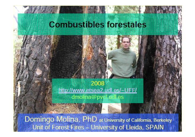 Combustibles forestales